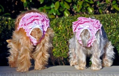 Doggie Design(ドギーデザイン)NEW Ruffled Pink Gingham Panties ニュー フリル ピンク ギンガム パンティー
