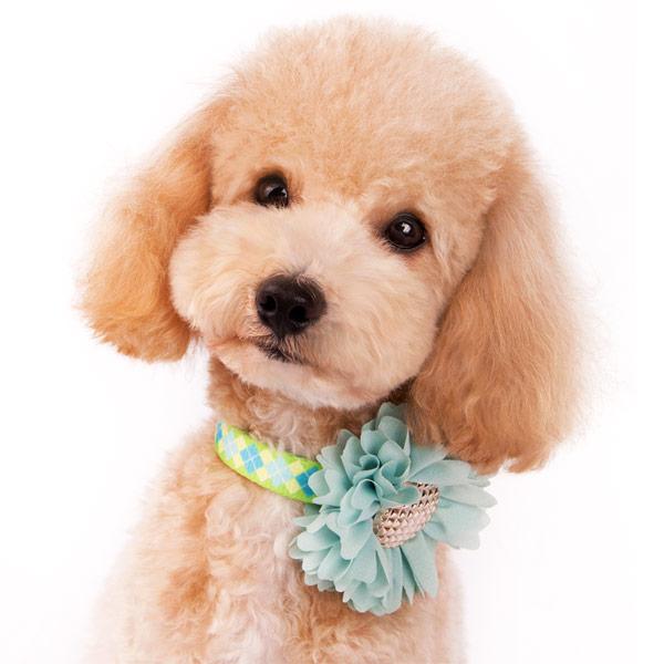 DOGO(ドゴ)EasyBOW Flower Blue イージーボウ フラワー ブルー